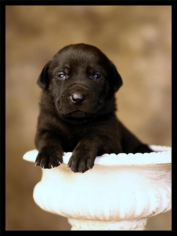Blue-eyed Puppy by La-Vita-a-Bella