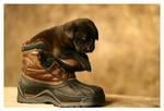 I Gave Him the Boot by La-Vita-a-Bella