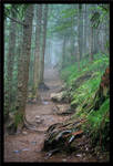 The Misty Trail
