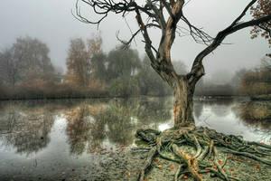 Pond in the Mist by La-Vita-a-Bella