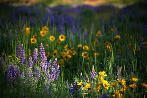 Wildflowers by La-Vita-a-Bella