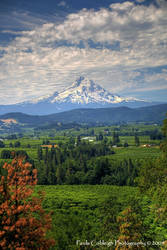 Mt Hood View by La-Vita-a-Bella