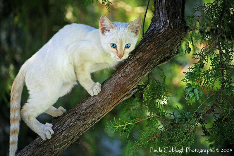http://fc07.deviantart.net/fs46/i/2009/238/e/b/Up_a_Tree_by_La_Vita_a_Bella.jpg