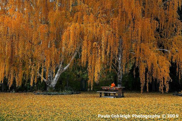 October by La-Vita-a-Bella