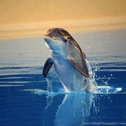 Baby Dolphin by La-Vita-a-Bella