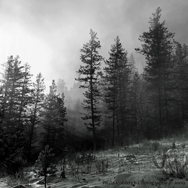 Forest Light by La-Vita-a-Bella