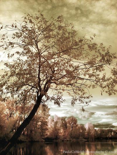 Infrared Dreams by La-Vita-a-Bella