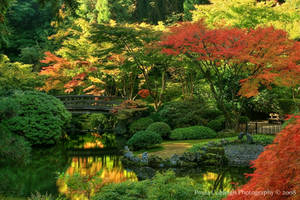 Japanese Pond by La-Vita-a-Bella