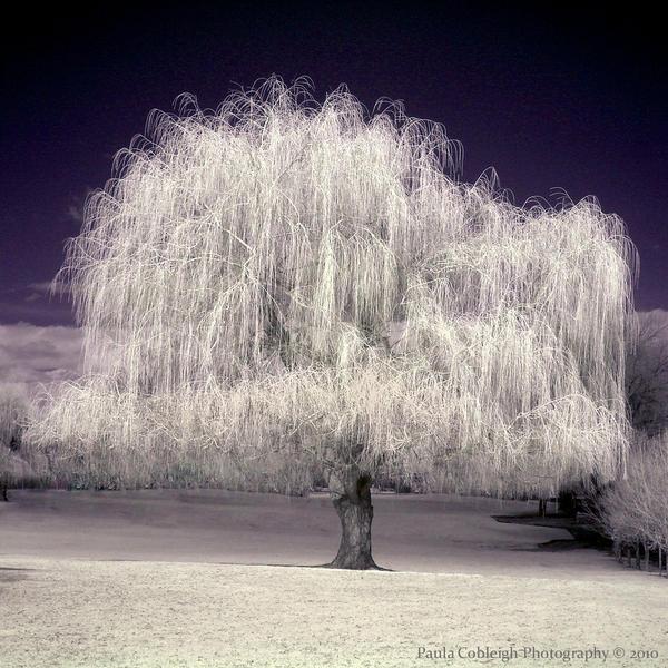 The Dark Tree of Dreams by La-Vita-a-Bella