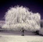 The Dark Tree of Dreams