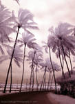 Infrared Palm Path