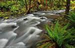 Susan Creek