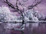 Infrared Pond V