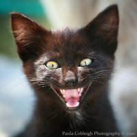 Vampire Kitten by La-Vita-a-Bella