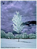 Magic Tree by La-Vita-a-Bella