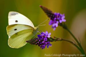 Butterfly by La-Vita-a-Bella