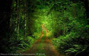The Road to Your Dreams by La-Vita-a-Bella
