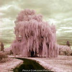 Infrared Pink SillyString Tree