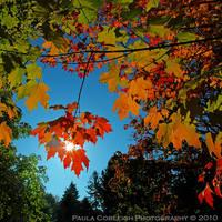 Autumn Sun-star by La-Vita-a-Bella