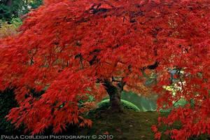 The Tree of Fire by La-Vita-a-Bella