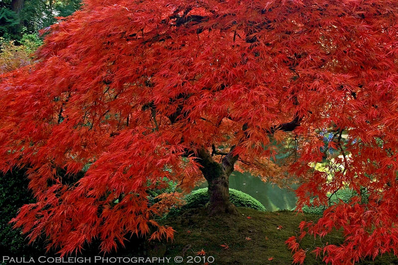 The Tree of Fire by La-Vita-a-Bella