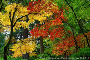 Yellow Red and Green Maples by La-Vita-a-Bella
