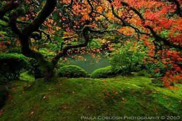 Autumn's Symphony by La-Vita-a-Bella