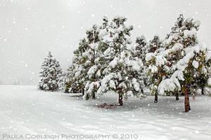 Snowing by La-Vita-a-Bella