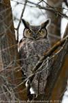 Great Horned Owl by La-Vita-a-Bella