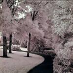 Path through Cotton Candy - IR