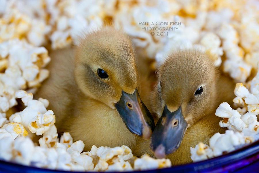 Quackerjacks by La-Vita-a-Bella