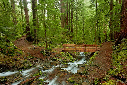 Olympic National Park II