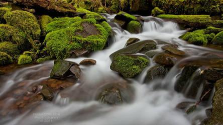 Forest Zen