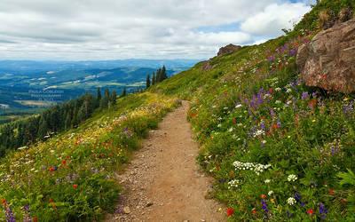Silver Star Mountain Trail
