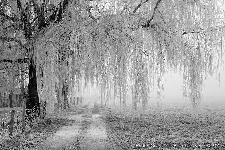 Winter Willow by La-Vita-a-Bella