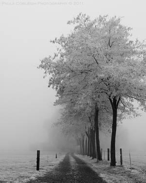 Into the Fog by La-Vita-a-Bella