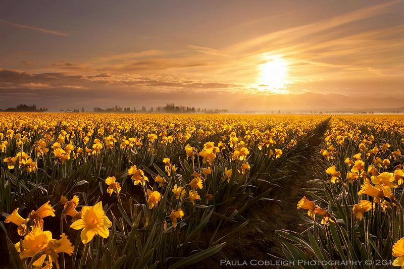 Golden Sunrise by La-Vita-a-Bella