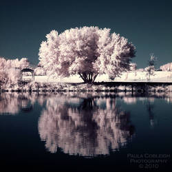 Cotton Candy Reflections by La-Vita-a-Bella