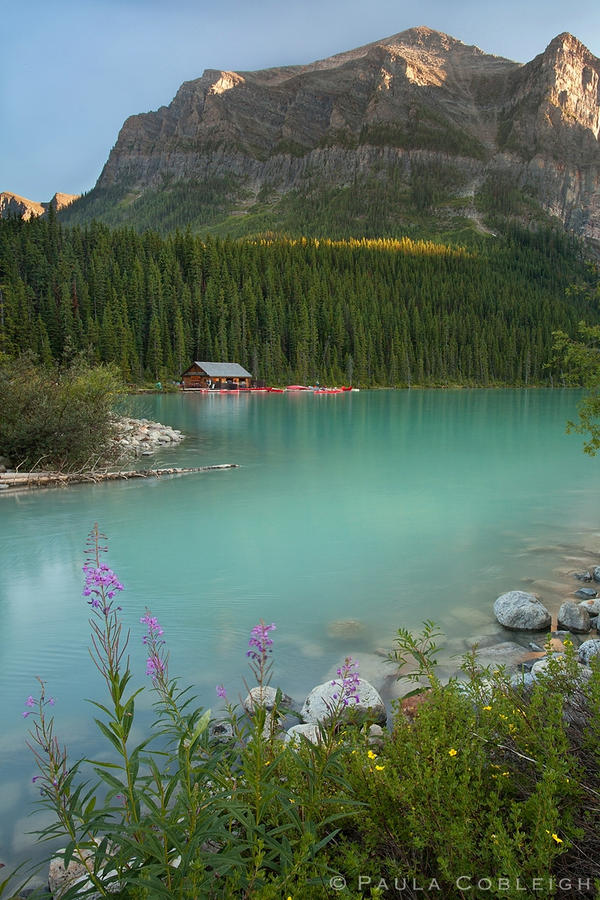 Lake Louise - summer flowers by La-Vita-a-Bella