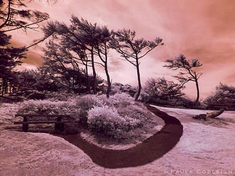 Infrared - Hidden Resting Spot