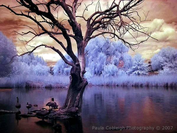 Infrared Pond by La-Vita-a-Bella