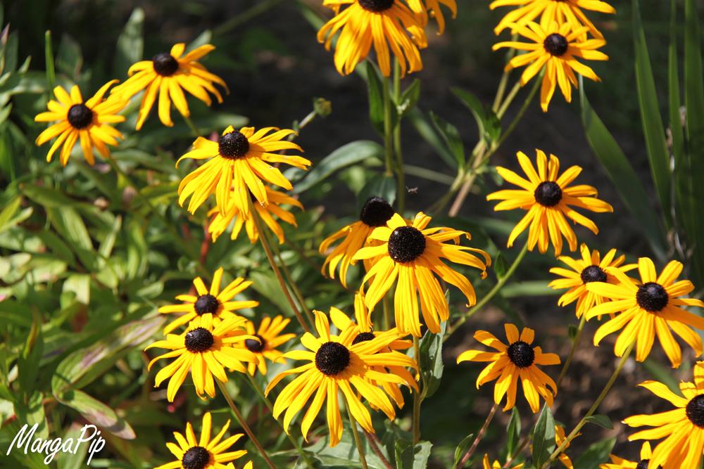 Yellow Garden Flowers by MangaPip on DeviantArt