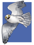 Snowy Owl - Commission