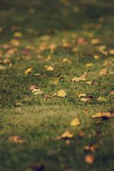 Autumn beginning by Oz34n