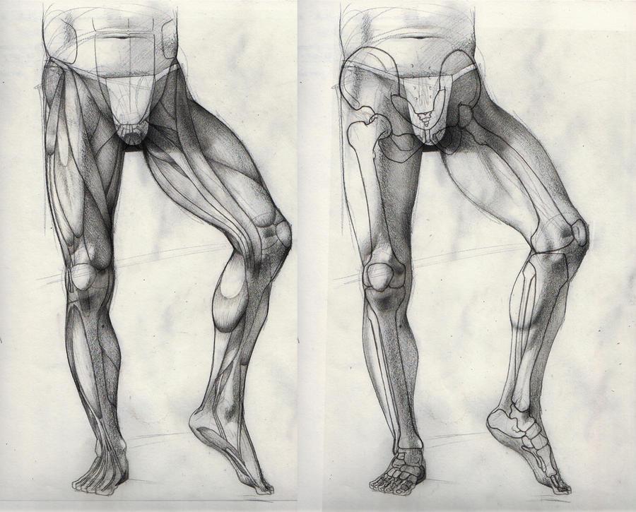 leg muscles drawing - photo #17