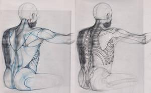 Back Study by doodlingdruid