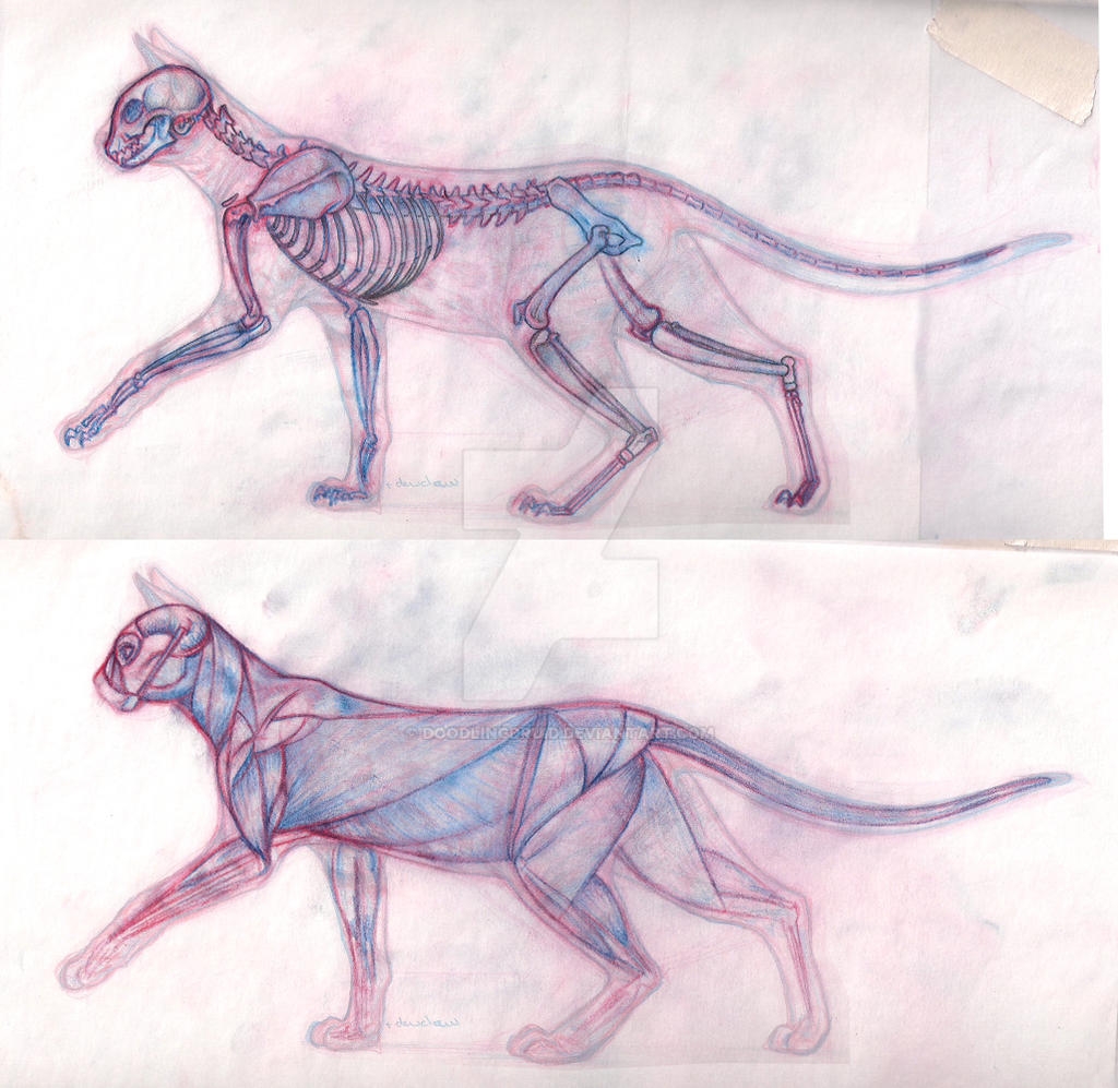 Cat-Butt Anatomy (and what our PT is working on)