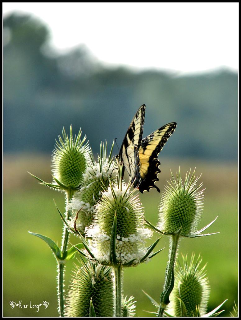 Butterfly by irish-eyes2