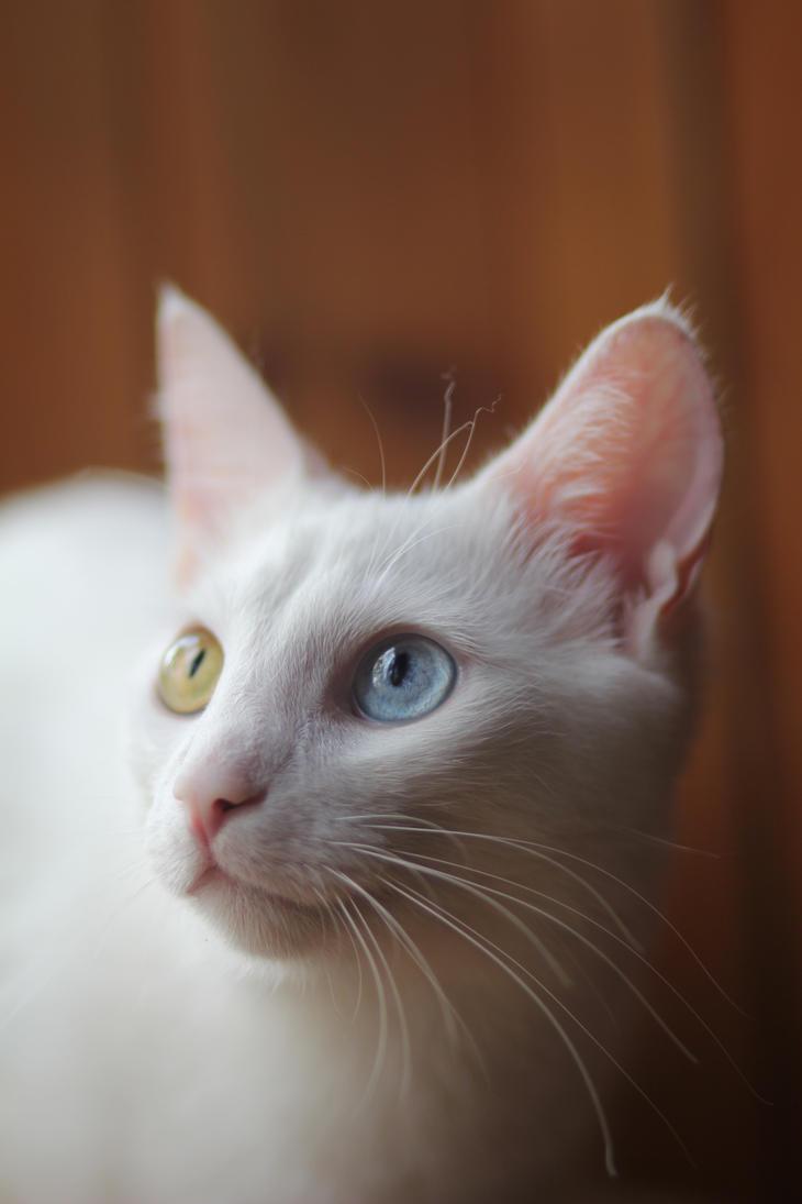 Lovely cat by SSTakaPrince