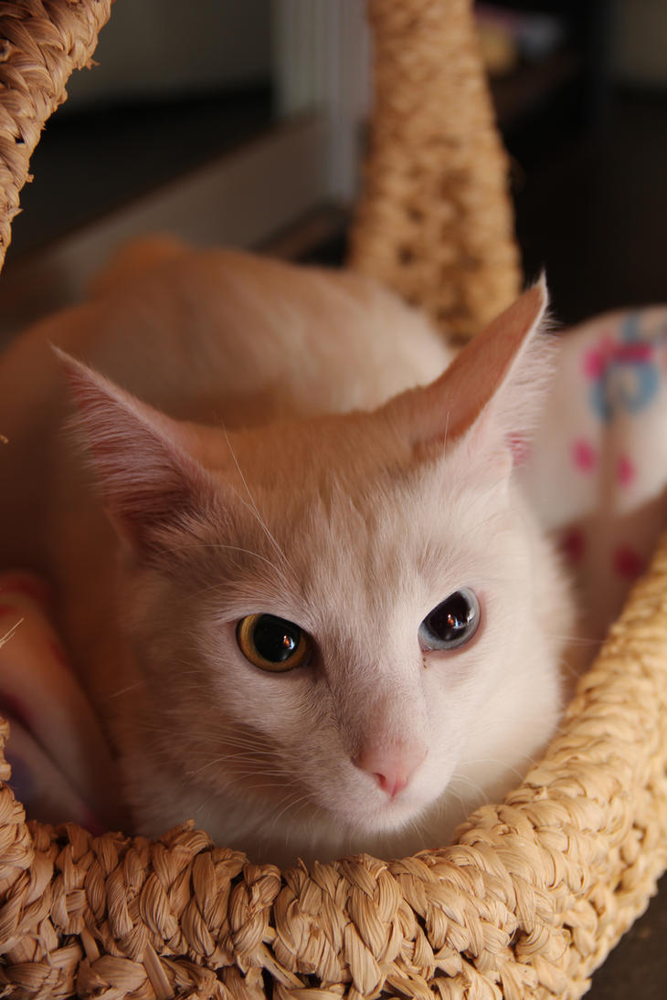 Everybody loves... Cat. by SSTakaPrince